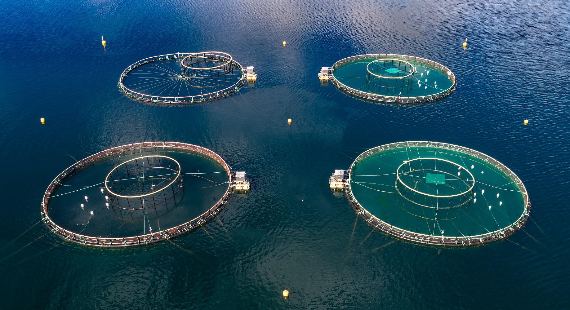 Polyurea Coatings in the Seafood Industry